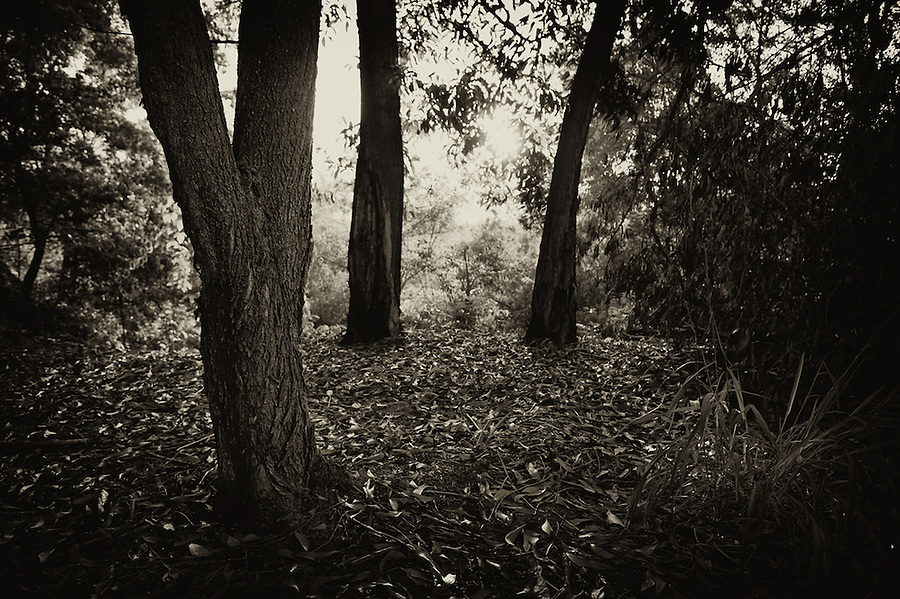 Abstract and Nature, Nature, Abstract, Black and White