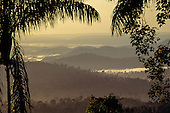 Para State, Brazil. Overview of misty rainforest in dawn light with palm leaves and branches in silhouette in foreground; Serra dos Carajas.