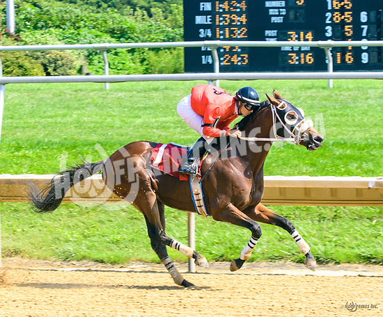 Think He's Gone winning at Delaware Park on 8/19/17