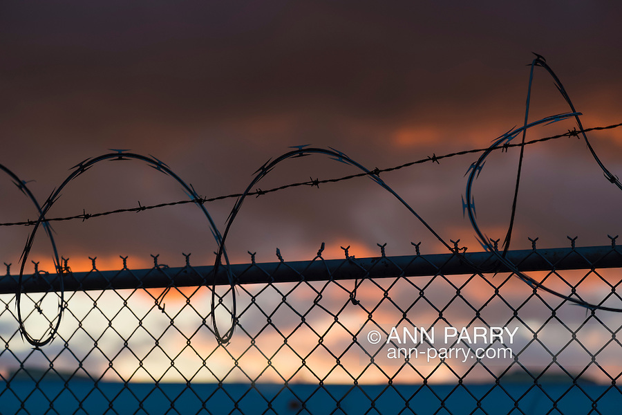Black spirals of long barb razor wire on top of wire fence at colorful sunset