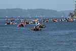 Canoe Journey, Paddle to Nisqually, 2016, Northwest tribal canoes arriving in Olympia, Washington, 7-30-2016, Salish Sea, Puget Sound, Washington State, USA,