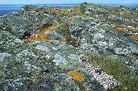 Lichens on rocky seashore