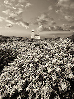 Coquile River Lighthouse with gorse. Bandon, Oregon