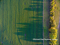 63801-09714 Wheat field and shadows from trees - aerial - Marion Co. IL