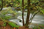 A coastal Creek in early spring. Oregon, USA