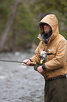 A fly fisherman fishing for steelhead and salmon on the Carp River a Lake Superior tributary near Marquette Michigan in spring.