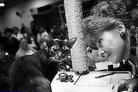 GROTON, CT - SEPT 10: Cats are evaluated by Cat Fanciers' Association Judges, during a cat show on Sunday, September 10, 2006, in Groton, CT. Cats earn points at regional shows like this one, so that they may have a chance to compete in the CFA-IAMS Cat Championship, which will be held at Madison Square Garden on October 14 & 15, 2006 in New York City. (photo by Landon Nordeman)