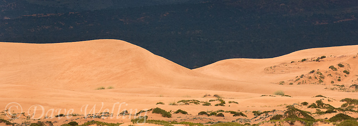 988000026 panoramic view of mountains and dunes in coral pink sand dunes state park utah