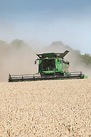 Harvesting Wheat in Lincolnshire<br /> ©Tim Scrivener Photographer 07850 303986<br />      ....Covering Agriculture In The UK....