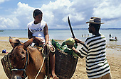Itaparica Island, Brazil. Coconut seller holding a coconut and a machete next to his donkey with its basket panniers; Bahia State.