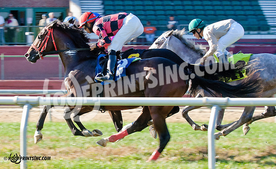 Shock Leader winning on 9/25/13