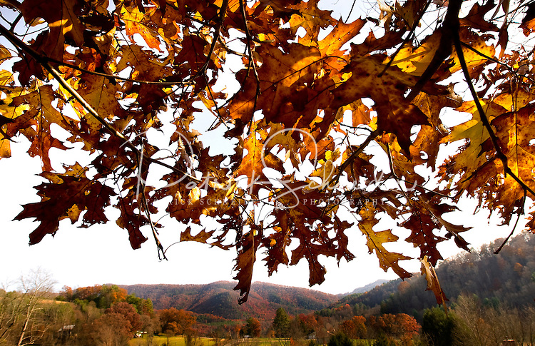 Brown and gold autumn leaves border a photo of the North Carolina/Tennessee mountains in the background. Photo was taken near Avery County, North Carolina and Johnson County, Tennessee.