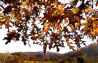 Autumn scenes general