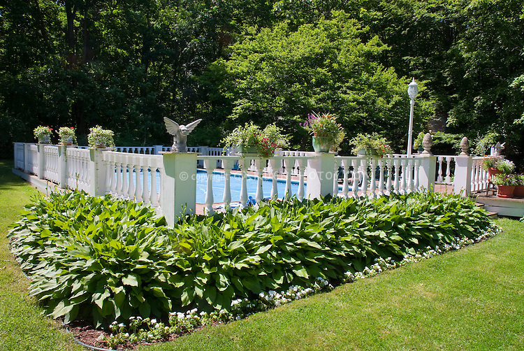 Swimming pool landscaping plant flower stock Best plants for swimming pool landscaping