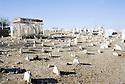 Irak 2000.Cimetiere de Halabja.Iraq 2000.Graveyard in Halabja
