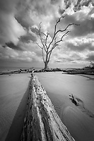 The driftwookd of Big Talbot Island in northern Florida photographed on a hazy morning.
