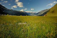 Alpine spring meadow,Imst district, Tyrol/Tirol, Austria, Alps.