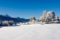 Deutschland, Bayern, Winterlandschaft im Chiemgau bei Siegsdorf (Alzing) mit Hochfelln und Hochgern der Chiemgauer Alpen | Germany, Bavaria, winter scene in Chiemgau near Siegsdorf (Alzing) with Hochfelln and Hochgern mountains of the Chiemgau Alps