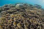 Raja Ampat, West Papua, Indonesia, Pacific Ocean