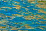 Ponderosa Abstract 2 - American River, Weimar, California.