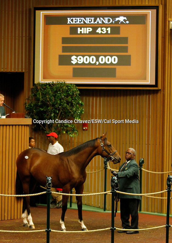 September 15, 2015: Hip 431 War Front - Magnificent Honour colt consigned by Eaton Sales.  Candice Chavez/ESW/CSM