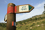 Israel, Upper Galilee, Naftali Mountains forest scenic road