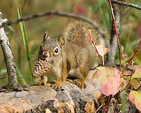 Squirrel, Rocky Mountain National Park, Colorado