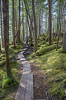 Trail in the Chugach National Forest along the Copper River Highway, southcentral, Alaska.