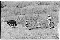 Uzbekistan - Aral Sea - A farmer walking her only cow around the Aral Sea.
