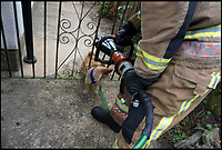BNPS.co.uk (01202 558833)<br /> Pic: KerriannGodwin/BNPS<br /> <br /> Firefighters use specialist equipment to free Hugo.<br /> <br /> This is the hilarious moment Hugo the miniature dog got stuck in his garden gate while the ginger cat he was chasing smugly looks on.<br /> <br /> The Chihuahua Yorkshire terrier cross dog tried to run through a gap in the metal gate after spotting the tom cat prowling outside his front garden in Bournemouth.<br /> <br /> Despite his tiny frame, the three-year-old got stuck fast in the gap and was unable to get himself free.<br /> <br /> His owner, Kerriann Godwin, calling the fire brigade which arrived to free him.
