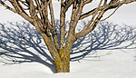 """Seen around yard of apartment on 3rd day after the big snow storm """"Stella"""" in Saugerties, NY on Thursday, March 16, 2017. Photo by Jim Peppler. Copyright Jim Peppler 2017."""