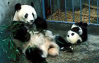China Panda Breeding