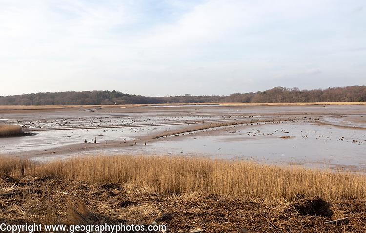 Benacre national nature reserve, North Sea coast, Suffolk, England, UK tidal lagoon low tide
