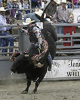 29 Aug 2004: Bull Rider Calssidy Mathews riding the bull Fire Ball during the PRCA 2004 Extreme Bulls competition in Bremerton, WA.