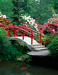 Kubota Gardens, Seattle, WA<br /> Moon Bridge surrounded by blossoming rhododendrons arched over a pond on Mapes Creek