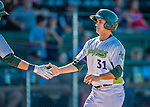 5 September 2016: Vermont Lake Monster outfielder Tyler Ramirez returns to the dugout after scoring against the Lowell Spinners at Centennial Field in Burlington, Vermont. The Lake Monsters defeated the Spinners 9-5 to close out their 2016 NY Penn League season. Mandatory Credit: Ed Wolfstein Photo *** RAW (NEF) Image File Available ***