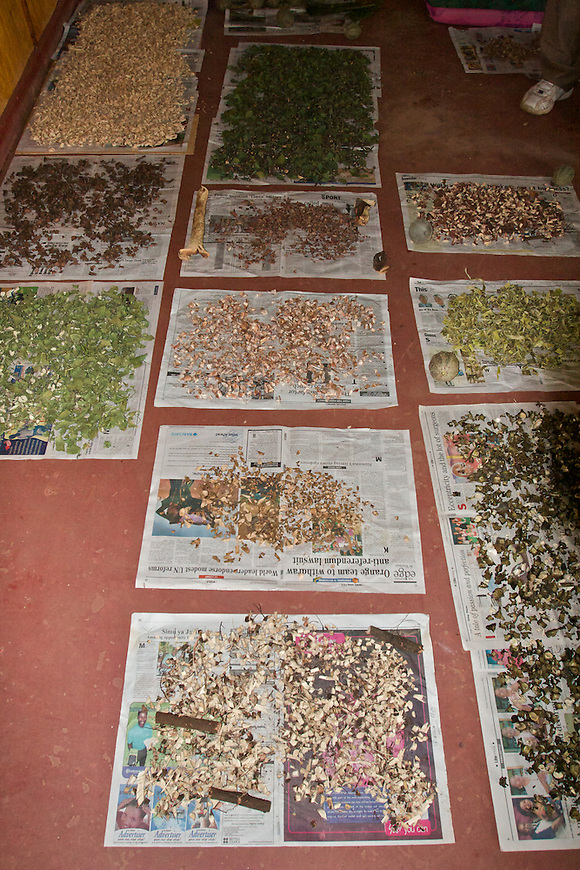 Drying plant samples that will be taken to the lab in Wamba for thorough testing of medicinal properties.