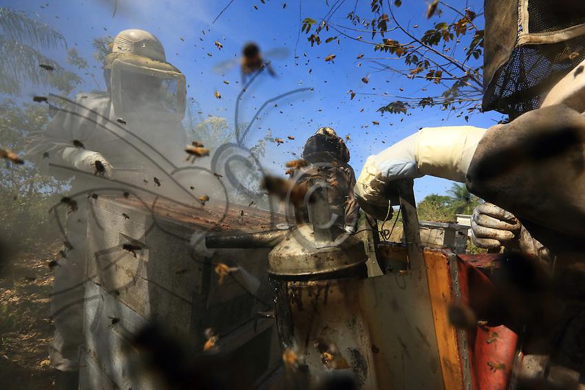 During the honey harvest at the 80-hive apiary, all the guard bees unite and together attack the intruders///Pendant la récolte du miel dans le rucher de 80 ruches, toutes les gardiennes s'unissent et attaquent ensemble les intrus.