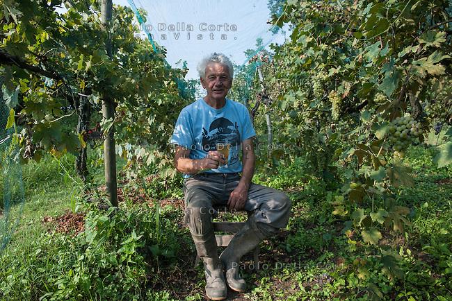 Venezia, Isola di Sant'e Erasmo. Gastone e Dariella Vio sono ila memoria storica della Dorona, il vino autoctono delle isole di Venezia. La vendemmia del 2014. NELLA FOTO GASTONE VIO VENDEMMIA