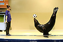 June 14, 2010 - Tokyo, Japan - A sea lion called 'Ballon' plays with a soccer ball at the Aqua Stadium in Shinagawa, suburban Tokyo on June 14, 2010. The new attraction is for the upcoming FIFA World Cup in South Africa.