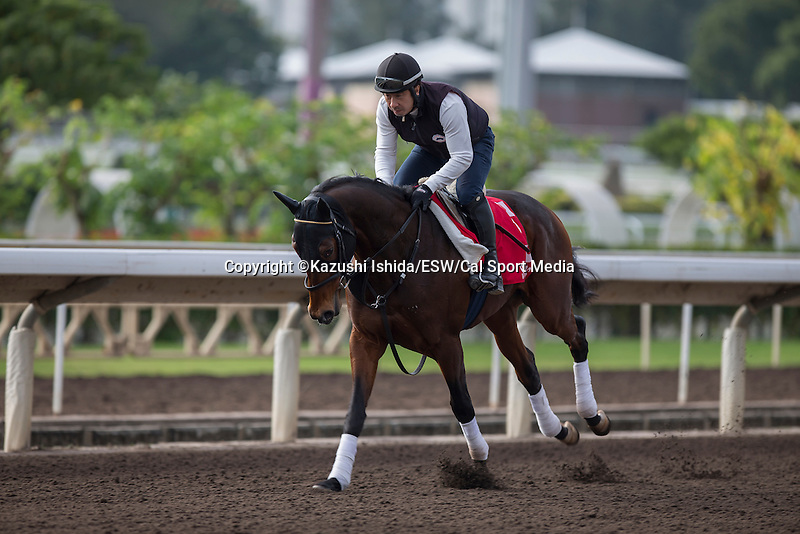DEC 11,2015: Staphanos ,trained by Hideaki Fujiwara,exercises in preparation for the Hong Kong Cup at Sha Tin in New Territories,Hong Kong. Kazushi Ishida/ESW/CSM