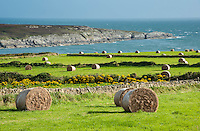 Big bales of hay in a field near  Holyhead, Anglesey, Wales. August 2012.
