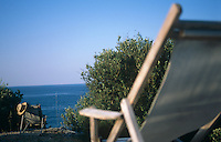 A pair of empty deck chairs tucked in amongst the olive trees look out over the Aegean sea