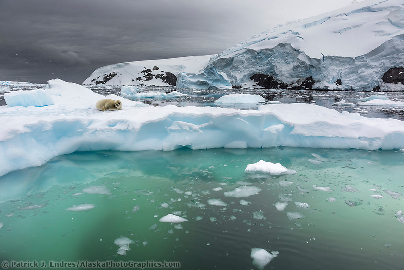 Floating iceberg in Cierva Cove, Antarctica.