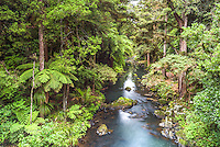 Hatea River landscape at the Whangarei Falls, a waterfall in the Northlands Region of North Island, New Zealand