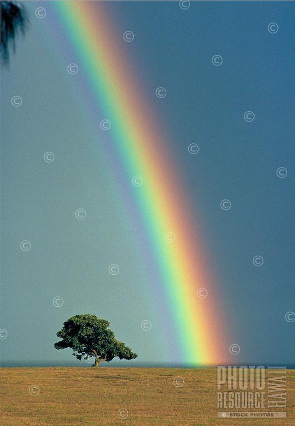 Rainbow near tree, Haleiwa, Oahu