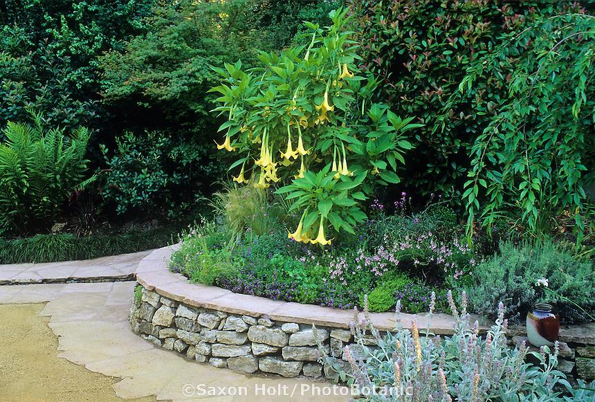 Brugmansia suaveolins 'Charles Grimaldi'(Datura)-Angel's Trumpet. Dana Garden. Chris Jacobsen Designer