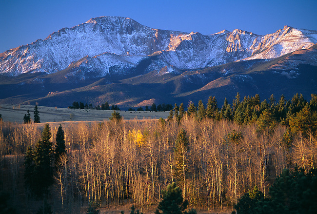 Morning light across fall aspen with Pikes Peak in background, near Colorado Springs, CO
