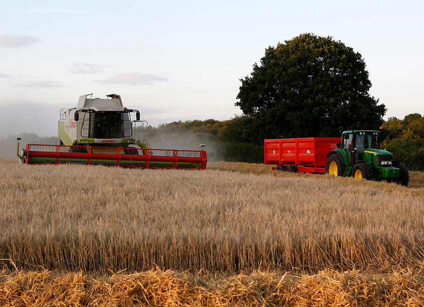 Photo: Richard Lane/Richard Lane Photography. Grain harvest near Great Missenden, Buckinghamshire. 22/07/2008. A Class combine harvester with a John Deere tractor and trailer.