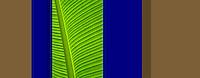 Flora, plant, tropical 7635